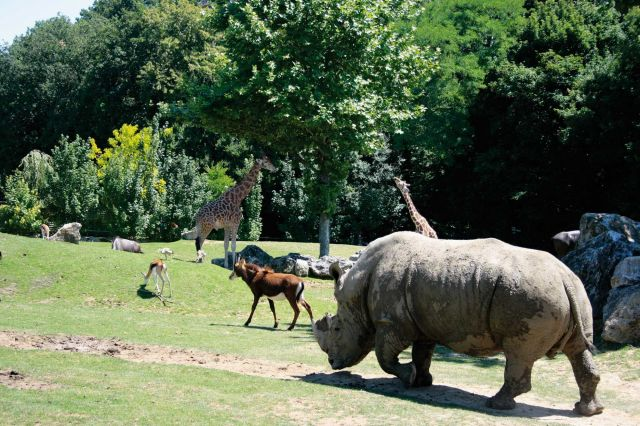 zoo beauval animaux