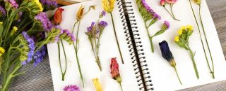 cahier pour herbier