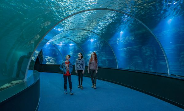 Cap sur Nausicaa, le plus grand aquarium d'Europe
