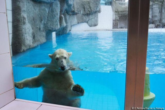 ours blanc zoo palmyre