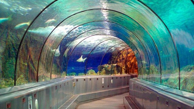 Marineland Antibes tunnel requin