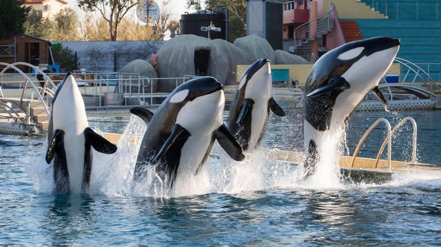 Marineland Antibes spectacles orques