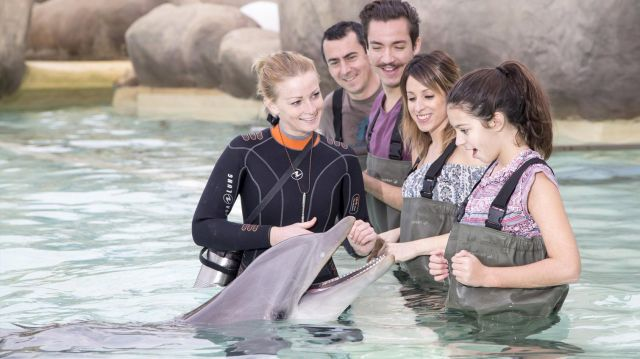 Marineland antibes rencontre dauphin famille